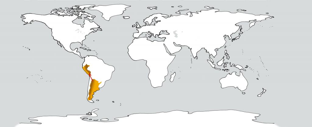 Eine weiße Weltkarte mit zwei goldenen Flecken in der Position Argentiniens und Perus. Ein roter Pfeil führt vom ersten zum zweiten.